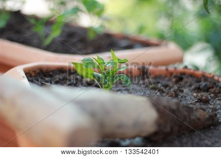 Planting saplings and seedlings with farmer hands
