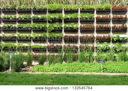 vegetable garden , Garden beds with seedlings and young greens