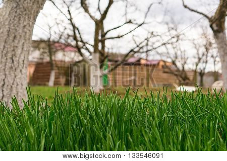 Close up of fresh thick grass in garden