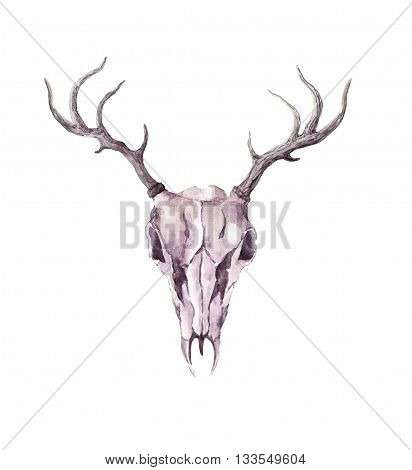 Skull of deer animal. Watercolor isolated illustration