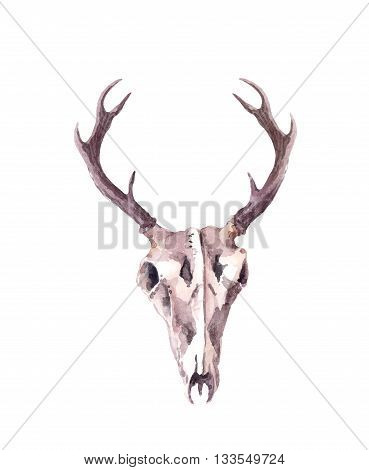 Skull of deer animal. Watercolor isolated illustration