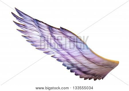 blue wings isolated on a white background.