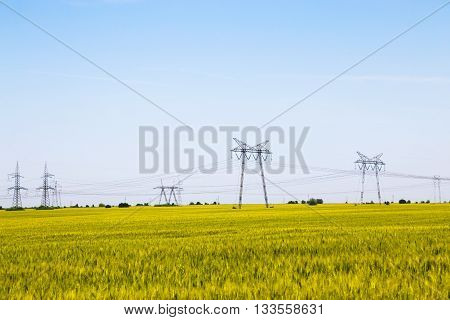 Landscape view of a field of ripening wheat with electricity pylons providing power in the background on a sunny blue sky day