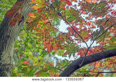 The various dimensions of leaves in autumn