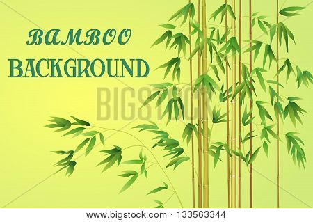 Bamboo Stems with Green Leaves on a Yellow Background. Vector