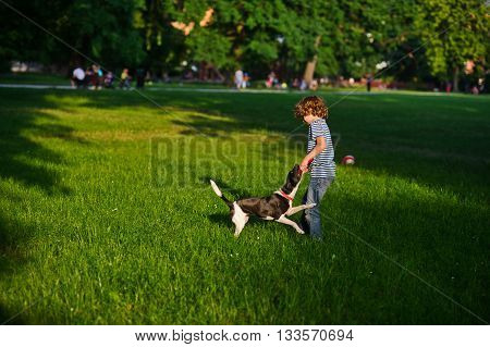 The naughty boy plays with doggy on a green glade in park.She tries to pull out a disk of red color from a mouth of a dog. But the dog has seized him strong. She likes to play.