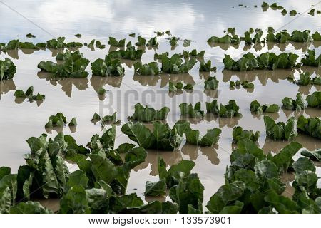 flooded plants in a field after storms