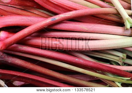 Fresh rhubarb stacked in a pike on Farmers Market