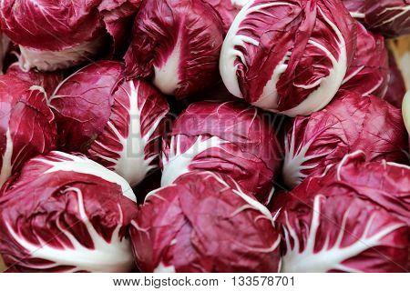 Fresh Radicchio Lettuce on Farmers Market in Italy