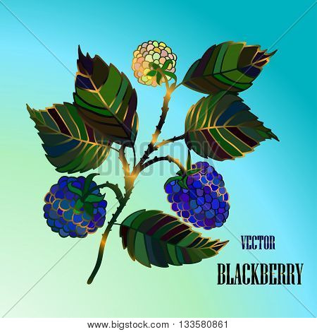 Color vector blackberry branch with blue berries. Vector illustration.