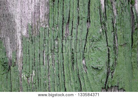 Old Weathered Painted Green Wood Background Texture