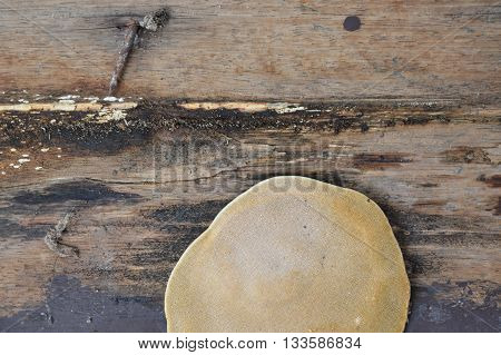 big fungus on the old wooden board