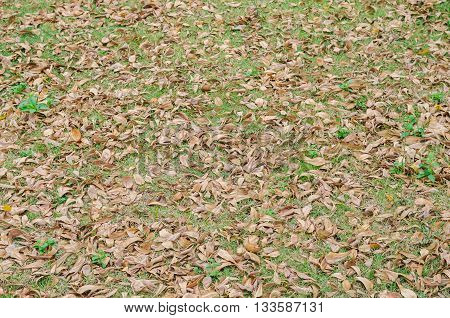Pattern of dry leaf drop on green grass in autumn. Suitable for use as wallpapers.