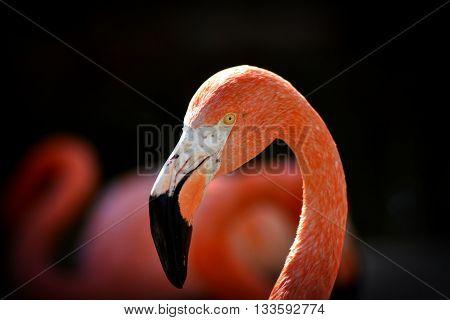 Flamingo, foto hecha en el Zoo de Barcelona.