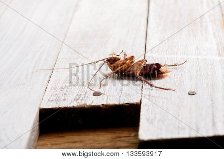 Dead cockroaches on the white floor.