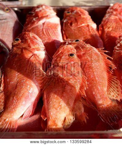 Fresh fish in street market, Fresh raw of fish in the market. Fish market in Marsaxlokk, Malta