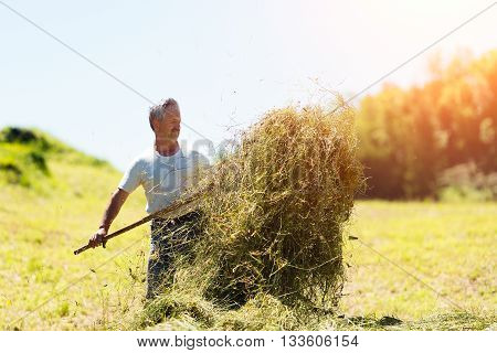 Woman farmer turns the hay with a hay fork in the italians alps