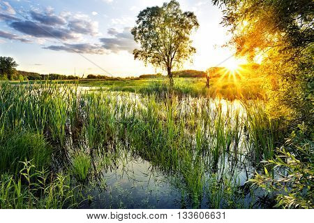 Lake with reeds in the bright setting sun