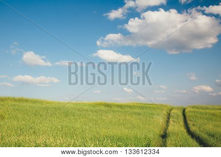 the track of the vehicle in a field on a summer day