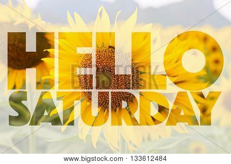 Hello Saturday word on sunflower - background