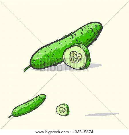 hand drawn vector illustration with vegetables green cucumber. vector eps 10