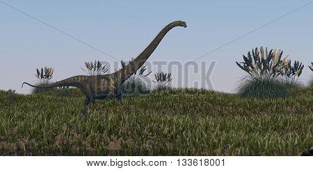 3d illustration of walking mamenchisaurus