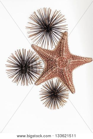 closeup view of starfish with decorated sea urchins on grey background
