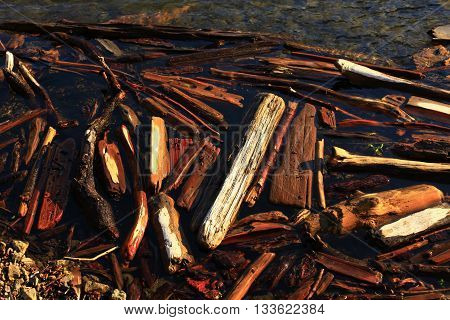 a picture of an exterior Pacific Northwest lake shoreline of wood logs