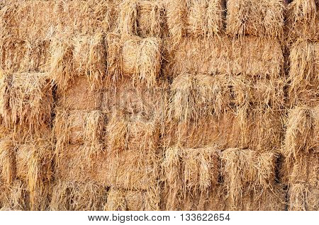 Dry Haystack stock after the harvest season