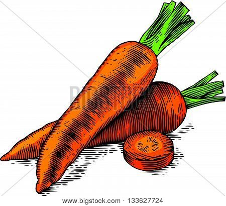 Drawing of two whole fresh carrots with slice on the white background