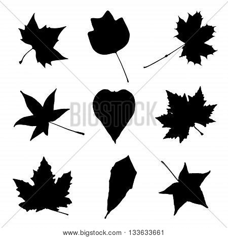 Collage of autumn leaves. Black and white vector graphic. Autumn collage. Leaves in in picture. Natural theme. Trees symbol. Symbolic object.