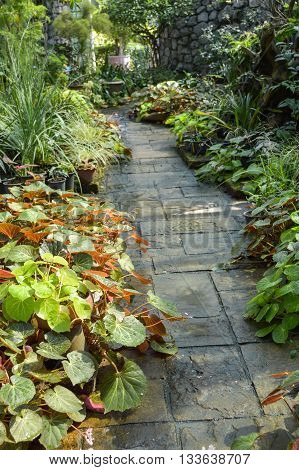 close up walkway in plants garden country Thailand
