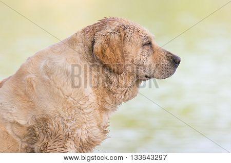 Homeless wet dog portrait at Lake Beletsi in Greece.