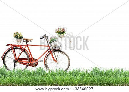 Old red Bicycle with basket flowers and green grass on white background