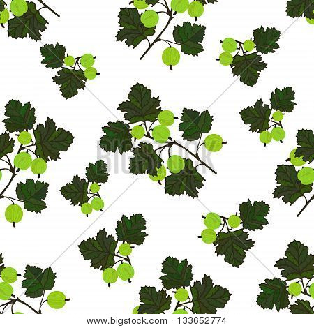 Colored gooseberries seamless pattern. Vector gooseberry vintage background. Seamless pattern with colored hand draw graphic gooseberries. Vector green berries template.