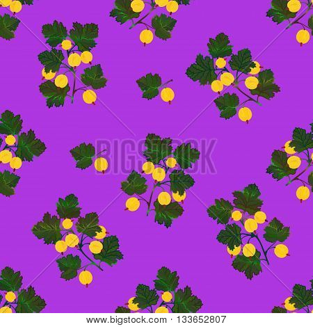Colored gooseberries seamless pattern. Vector gooseberry vintage background. Seamless pattern with colored hand draw graphic gooseberries. Vector yellow berries template.