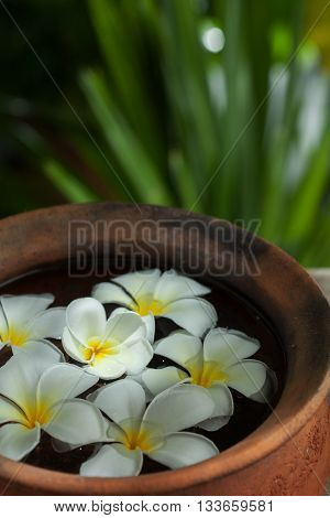 close up view of frangipani flower in red bowl on color back