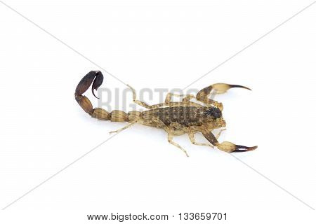 top view of isolated dangerous animals scorpion