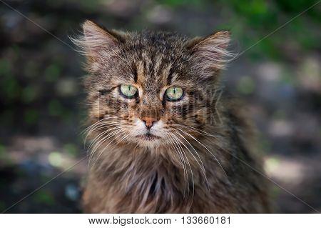 Homeless cat closeup. She looks pitiful sight.