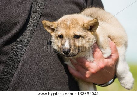 Gomel, Belarus - May 27: Exhibition Of Hunting Dogs. Competitions In Conformation May 27, 2013 In Go