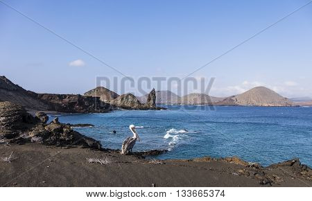 Brown pelican on shore with Pinnacle Rock in the background at Galapagos Islands
