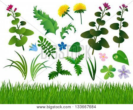 Herbs and wild flowers set isolated on white. Horizontal grass background
