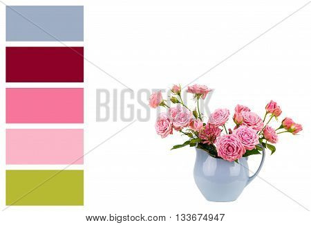 Pink flowers in blue jug and palette of colors. Roses in jug. Pink roses. Pink roses in a light blue vase on white background in a colour palette with complimentary colour swatches..