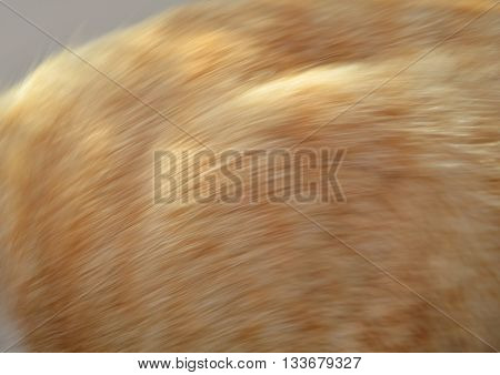 blurry of ginger cat fur texture and background