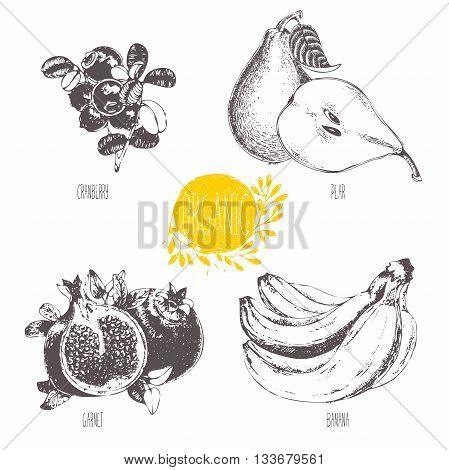 Series - vector fruit and spices. Hand-drawn illustration. Sketch. Healthy food. Linear graphic. Set of pear, banana, garnet and cranberry.