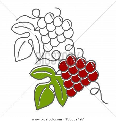 Wine tasting flyer poster with grapes isolated on a white background. Flat and line style design. Green and red vector illustration
