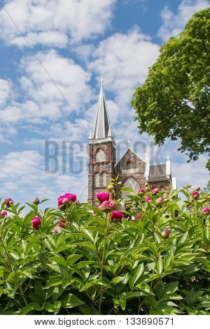 Pink Dahlias Bloom in front of Saint Peters Church vertical image