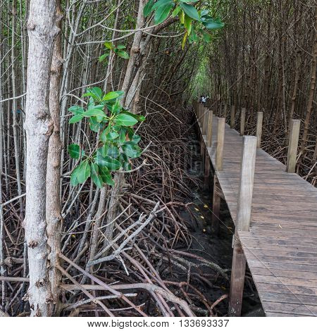 Walkway bridge in natural mangrove forest in Thailand