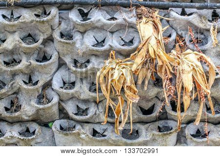 wall decorate of small pot and dry grass