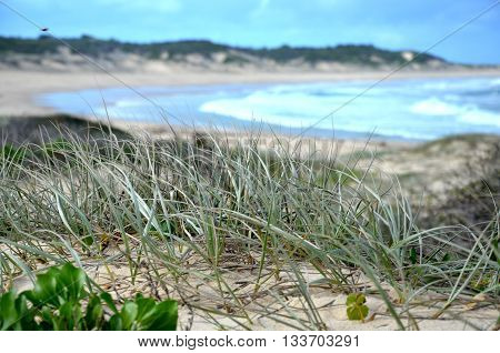 Grass can survive everything and lives in the beach sand.